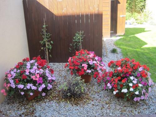 Millfield Garden flowers